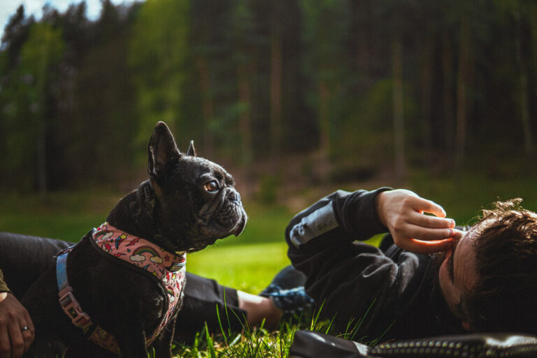 French Bulldog Tail : An Easy Guide