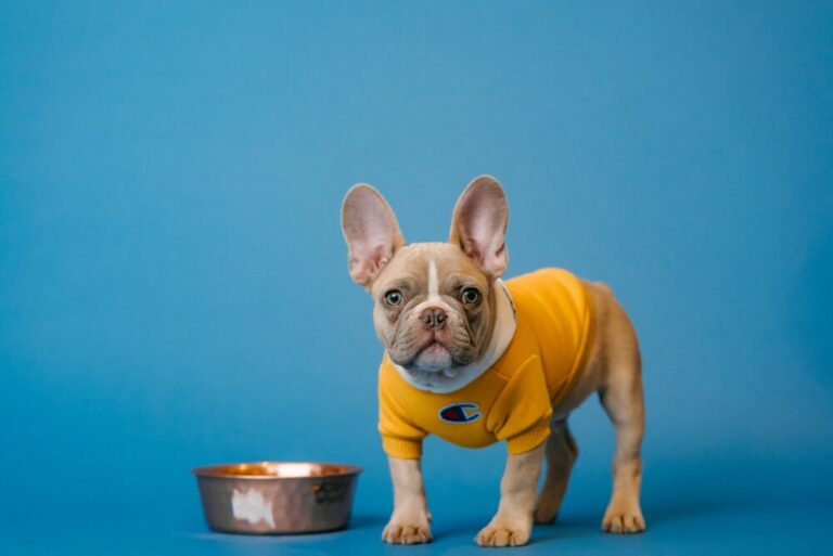10 Key Reasons Why French Bulldogs Are SO Expensive