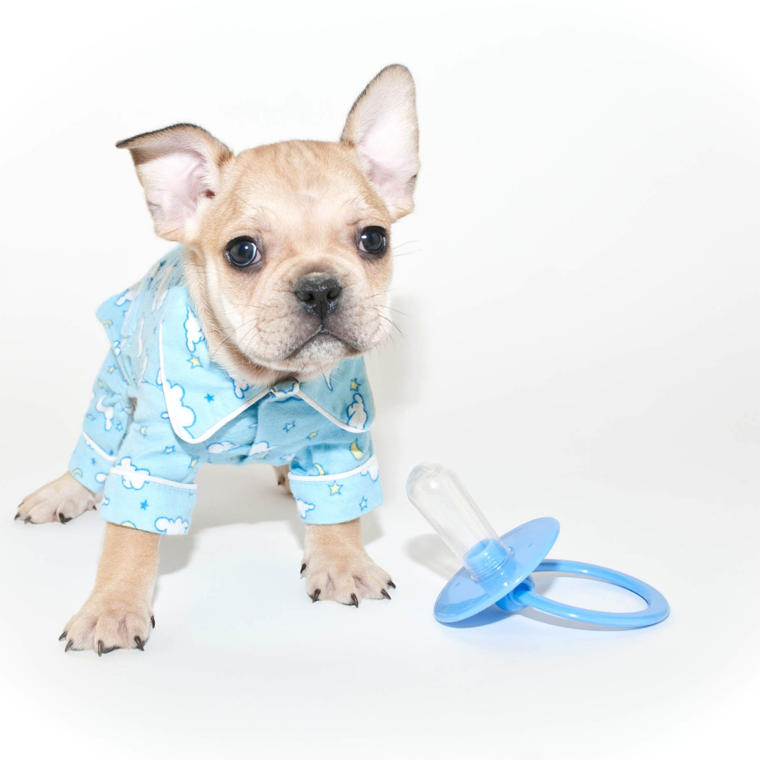 7 Adorable Pajamas For Your French Bulldog
