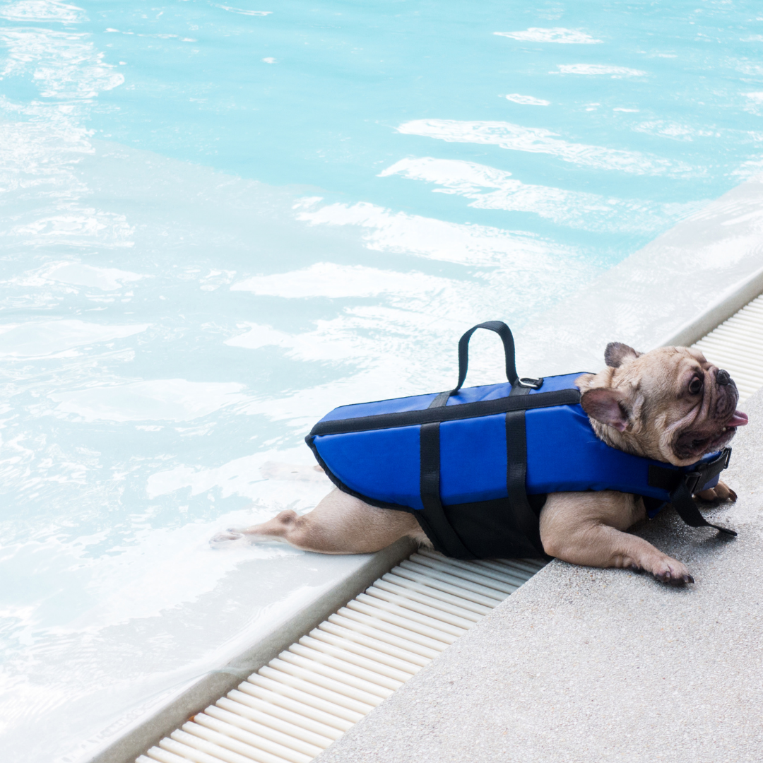 The 10 Best Life Jackets for French Bulldogs